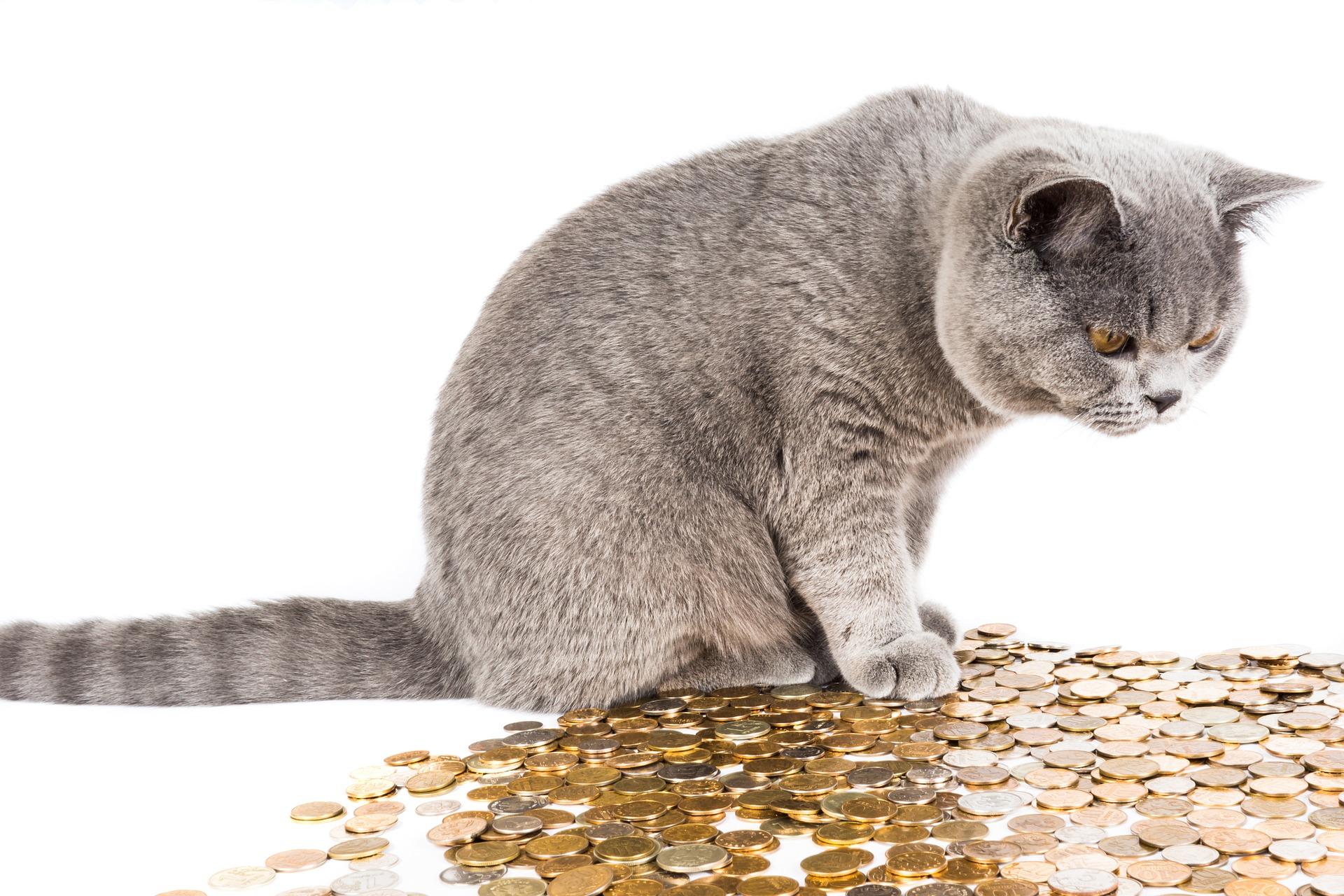 Au fait, peut-on léguer sa fortune à son chat ?