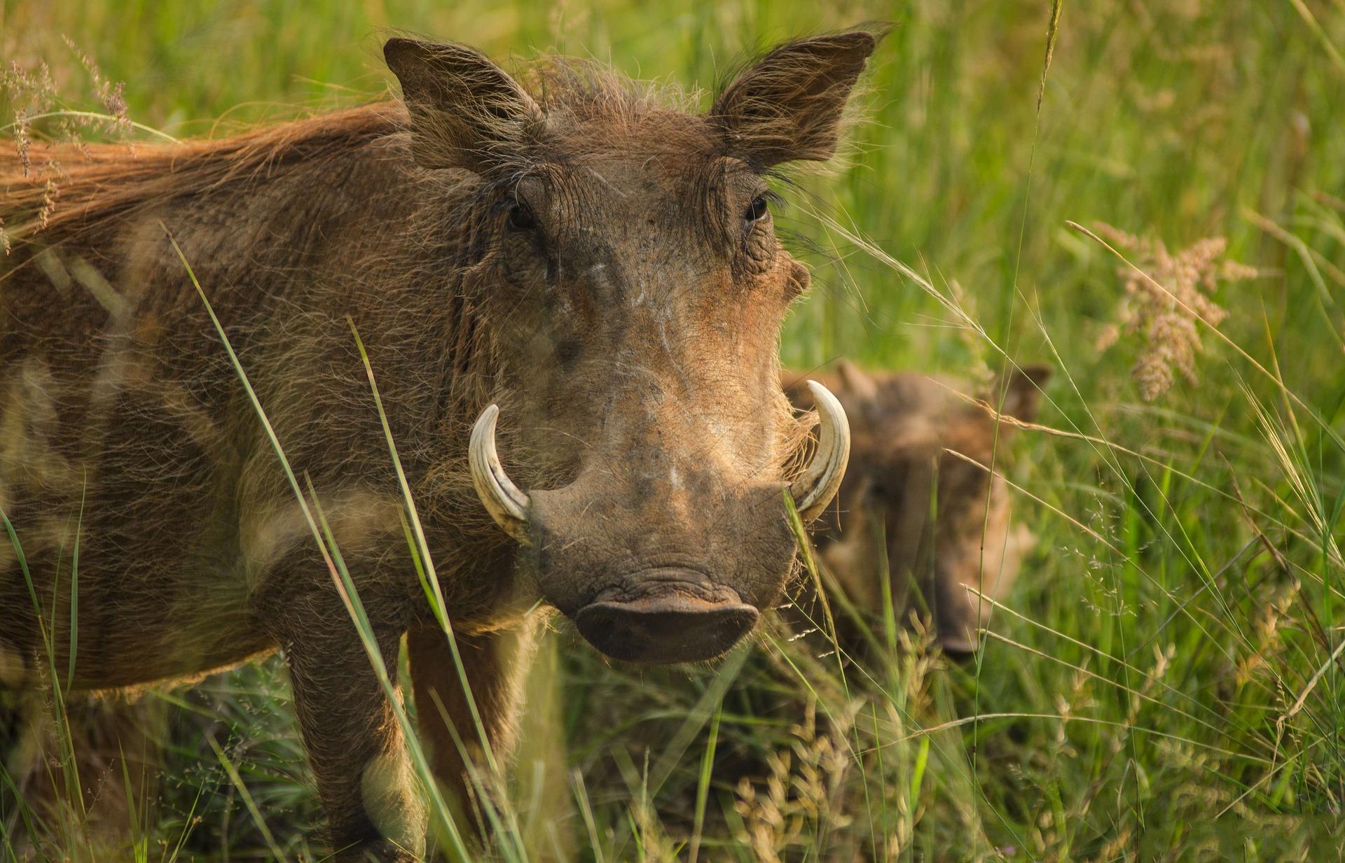 La cruauté envers les animaux est un délit rare et peu connu