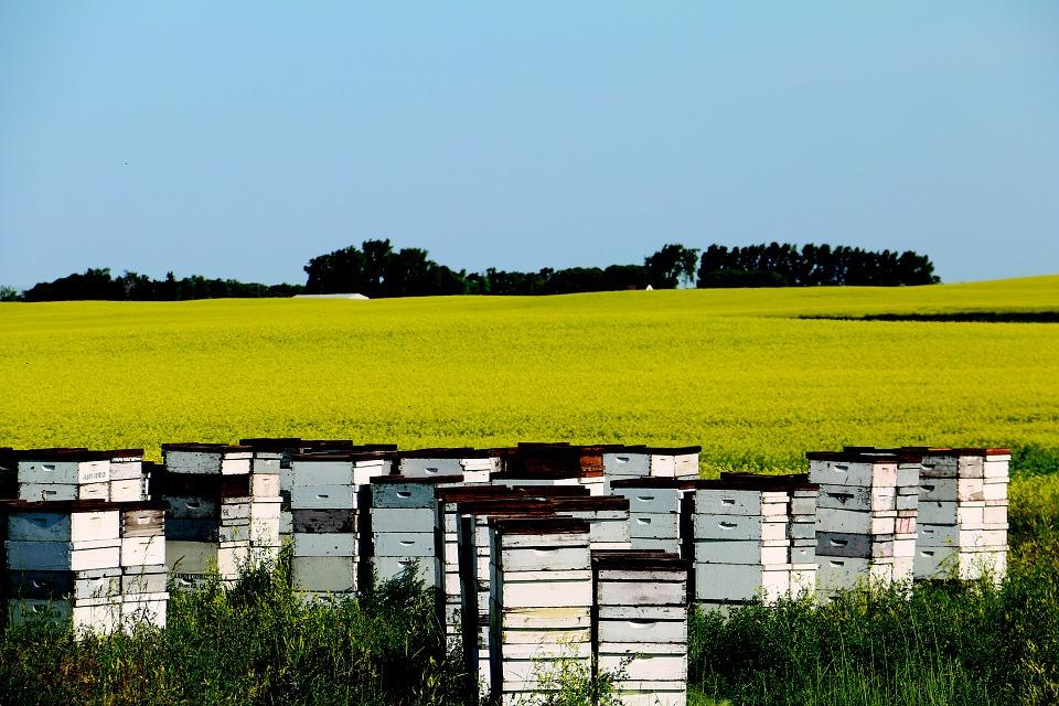 L'article L. 151-11 du code de l'urbanisme à l'épreuve de la plantation d'une jachère mellifère et de l'installation de ruches…