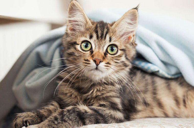 Le bien-être animal enfin reconnu et protégé : EXEMPLE A SUIVRE EN FRANCE