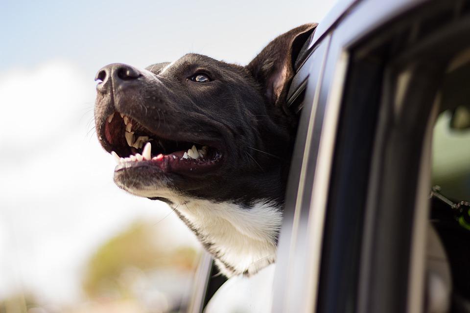 CE QU'IL FAUT SAVOIR SUR : La demande de restitution d'animaux vivants